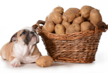 Can Dogs Eat Raw Potatoes & Is It Safe?