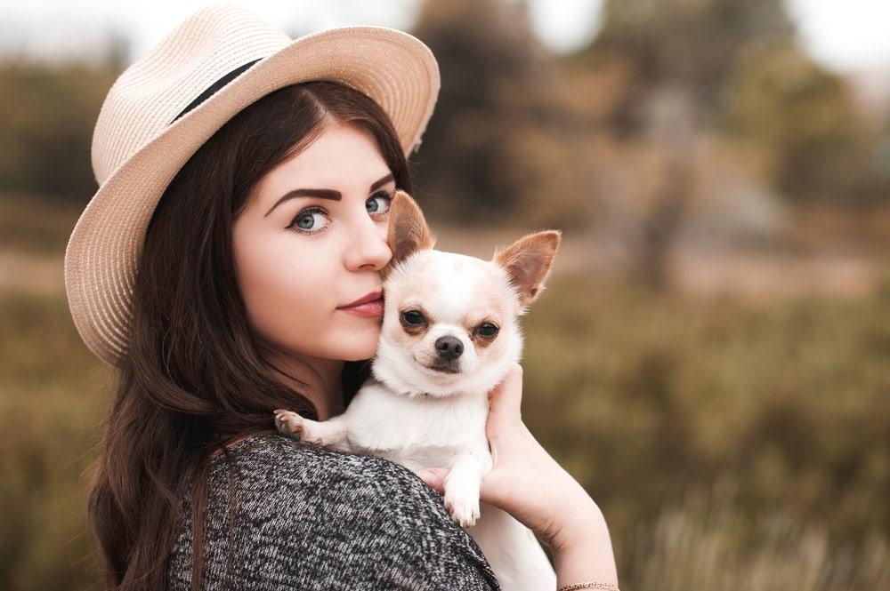 chihuahua and woman