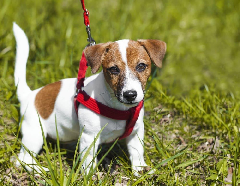 cute puppy in a grass
