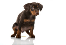 How Often Should Dogs Pee?