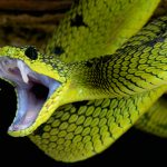 Top 5 Worlds Deadliest Snakes (With Info)