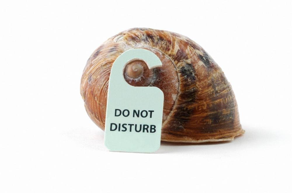 do not disturb snail sleep