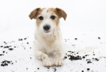 Why Do Dogs Eat Dirt?