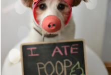 Why Do Dogs Eat Poop?