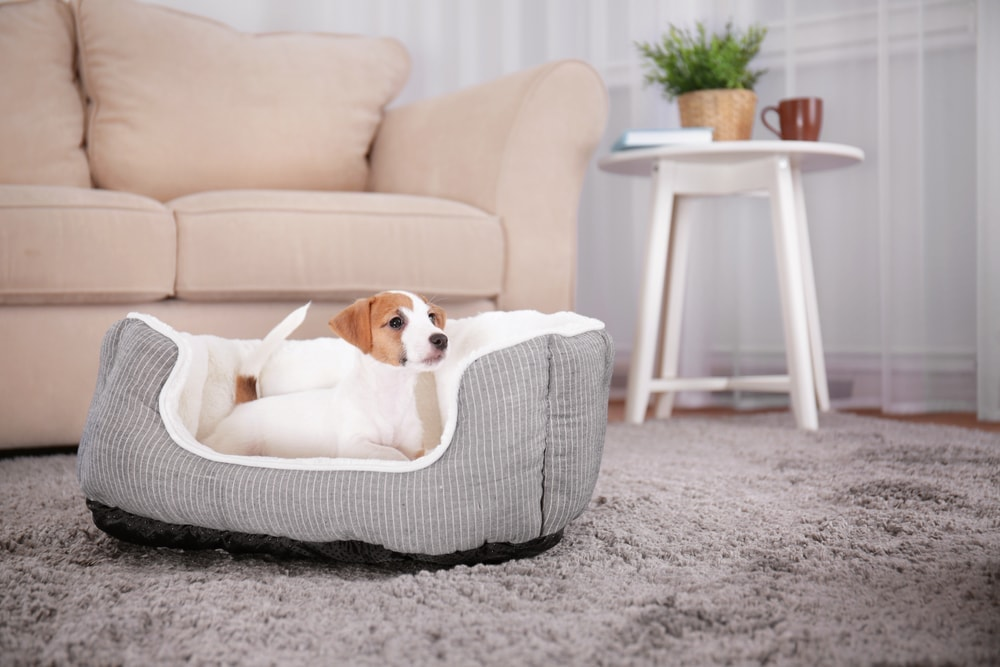 dog bed 2