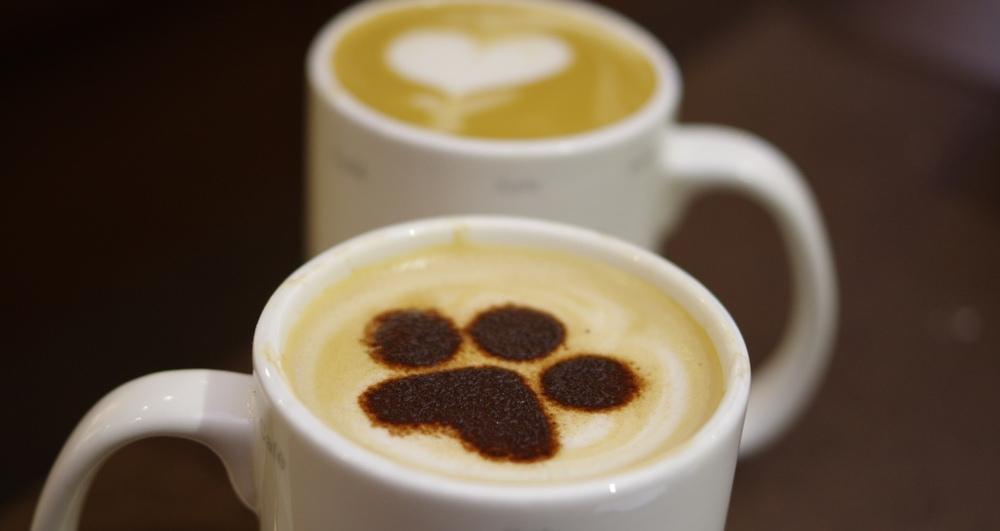 dog cappuccino