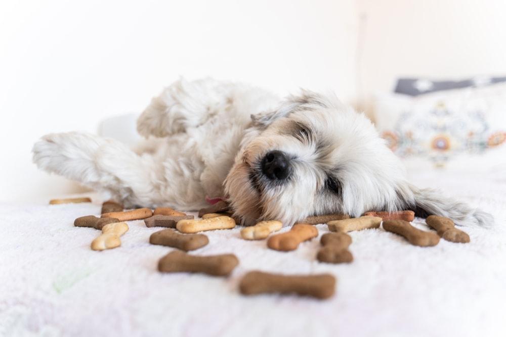 dog crackers