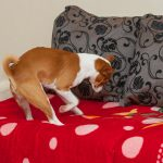 Why Do Dogs Dig in Their Beds?
