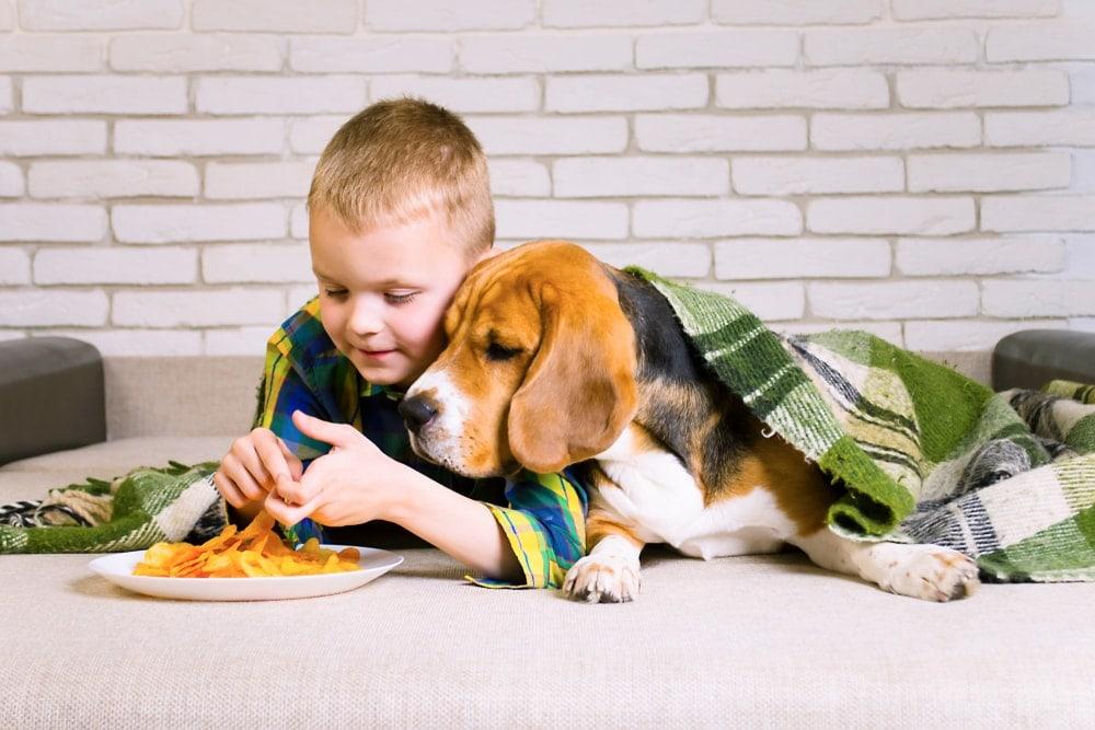 dog eats french fries