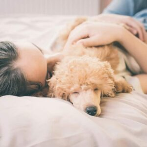 Top 10 Best Dogs for Anxiety