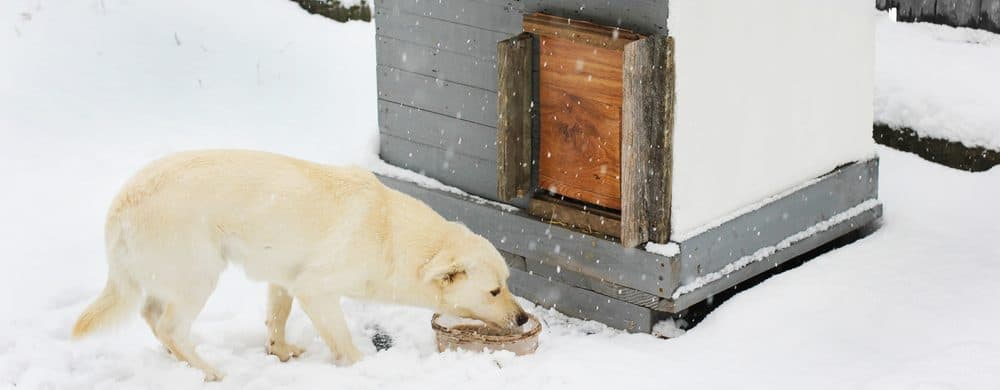 dog house 1 e1582790248470