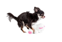 5 Reasons Why Your Dog is Humping the Air