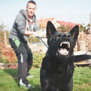 What to Do If Your Dog Bites Someone?