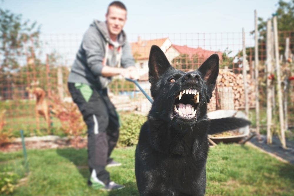 dog is attacking human
