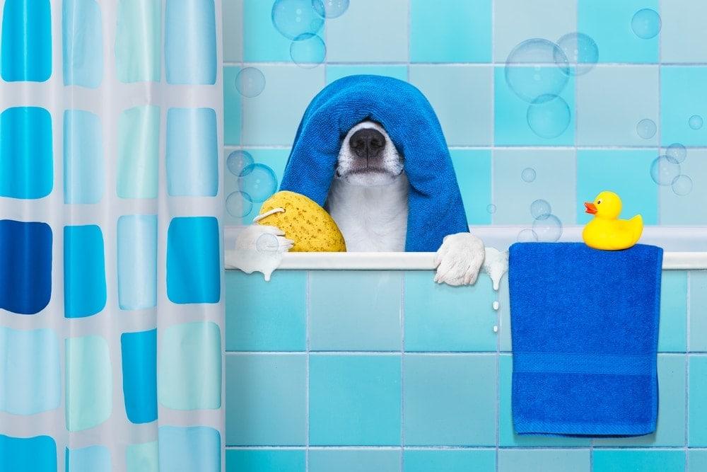dog is having a bath