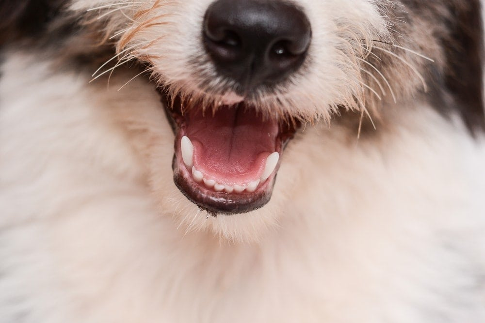 dog is smiling in a camera 1