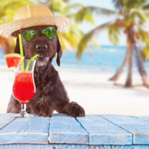 What Can Dogs Drink Besides Water?