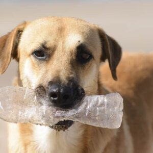 My Dog Ate Plastic - What should I do?