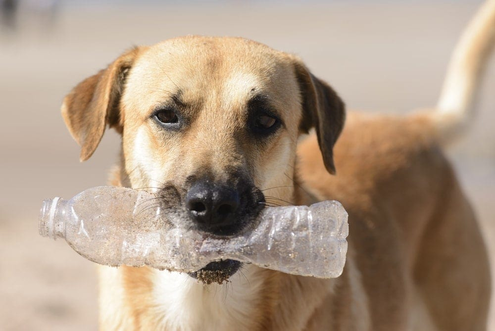 dog plastic bottle