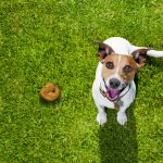 Why Do Dogs Roll in Poop?