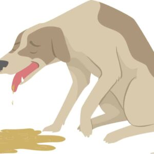 Why Is My Dog Vomiting Brown Liquid?