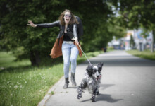 What to Do if Your Dog Gets Off-Leash