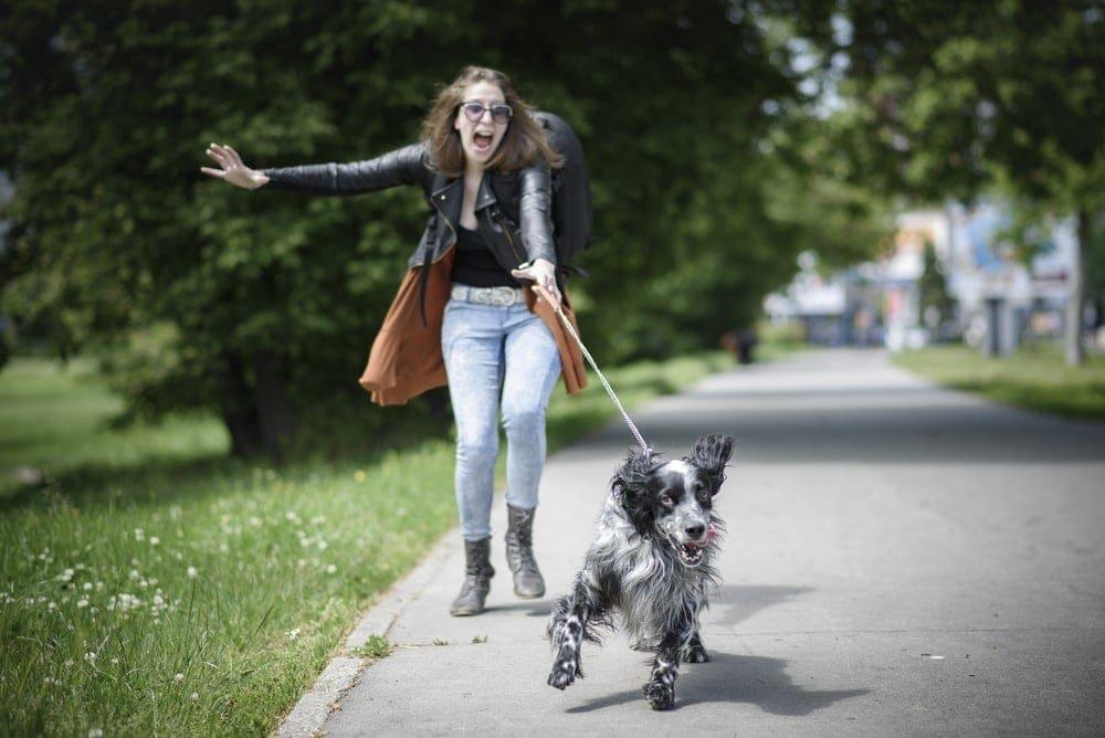 dog run away from leash