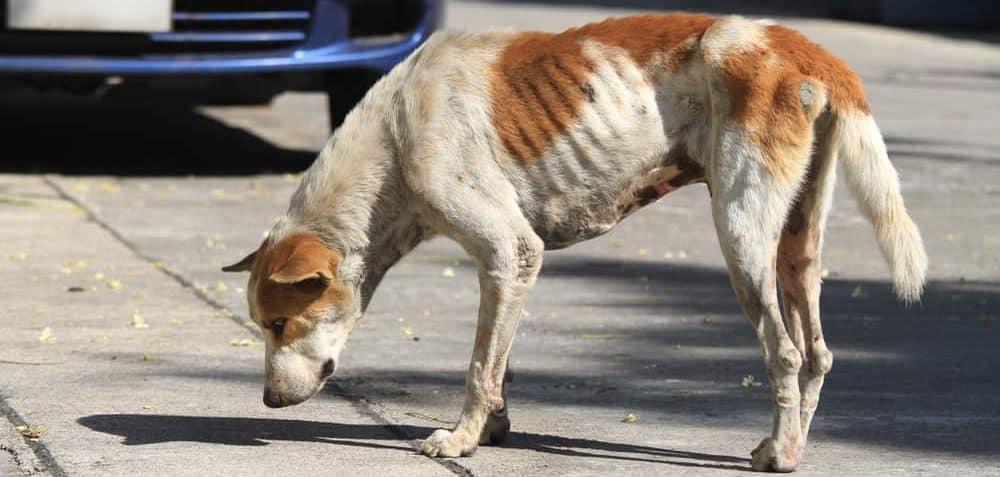 dog skinny 1 e1582686693899