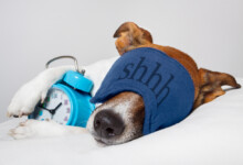 Reason Why Your Dog is Breathing Fast while Resting