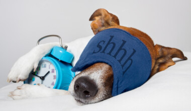 dog sleeps in a mask