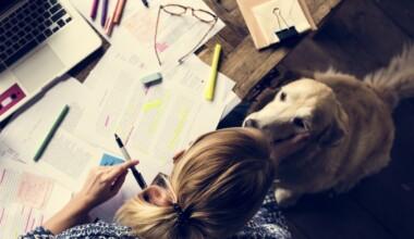dog study 1