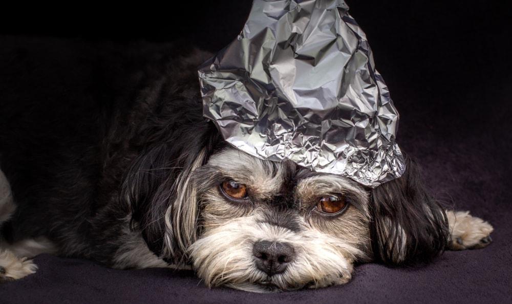 dog tinfoil hat