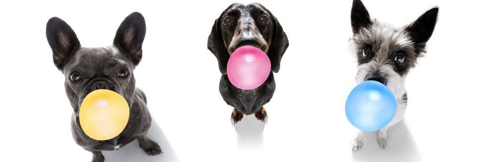 dogs gang eat gum e1582700529771