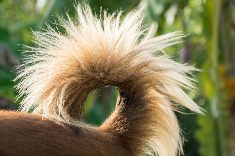 dogs tail