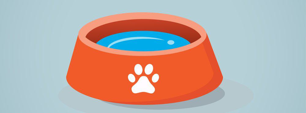 dogs water bowl e1582789978451