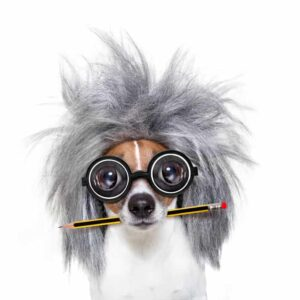 10 Dumbest Dog Breeds
