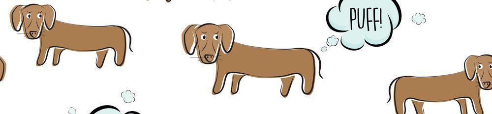 farting dachhound e1582788579625