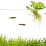 10 Best Floating Aquarium Plants for Beginners