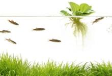 10 Best Floating Aquarium Plants for Beginners