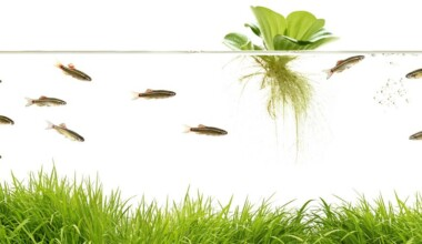 floating aquarium plant e1581002522221