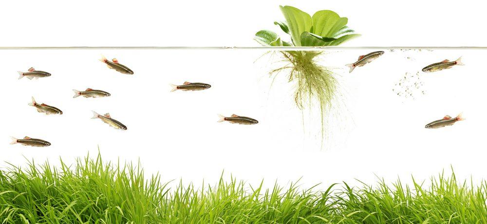 floating aquarium plant e1581002522221