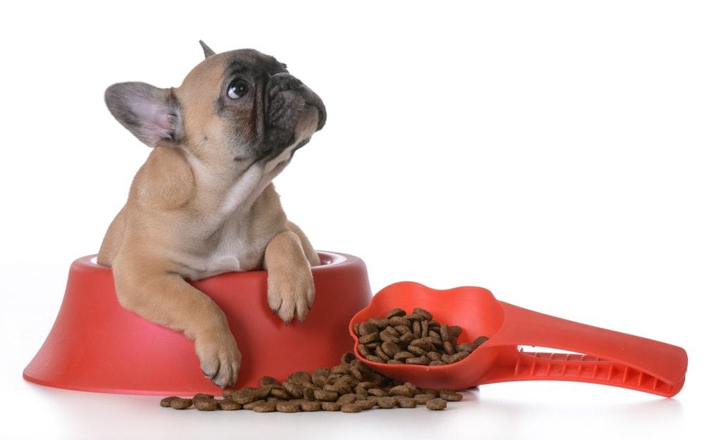 french bulldog eat dog food