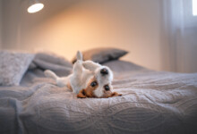 10 Best Behaved Dog Breeds