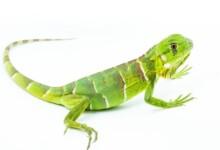 Basic Lizard Care Guide & Info