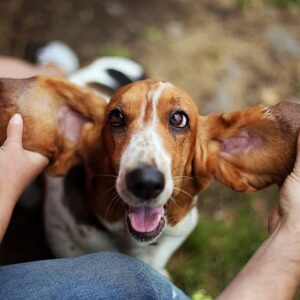 10 Best Dog Breeds for Depression