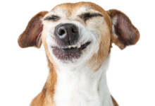 Why Do Dogs Chatter Their Teeth?