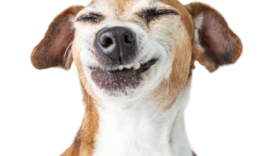 happy dog 2