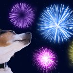 How to Calm Your Dog During Fireworks