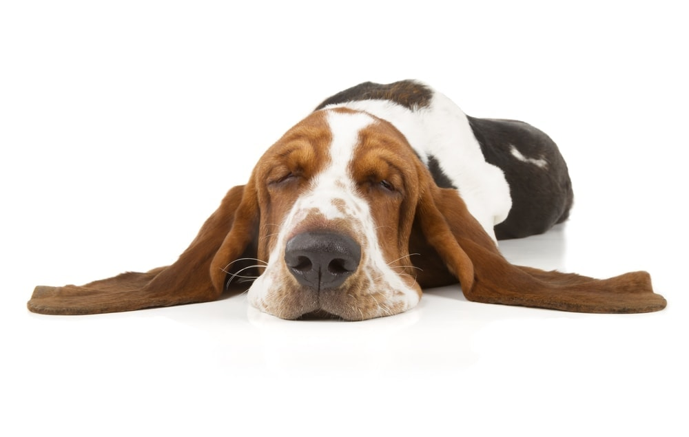 low energy dog 1