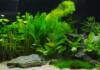 10 Low-Light Freshwater Aquarium Plants